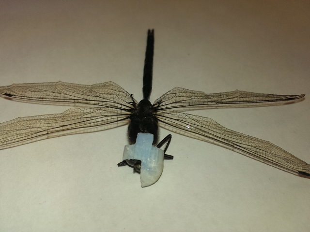 Dragonfly Eye Patch Design