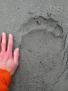 Grizz footprint