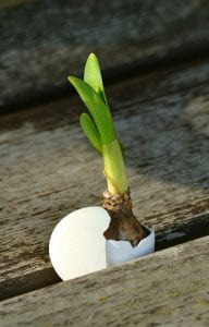 Image: onion breaking out of eggshell