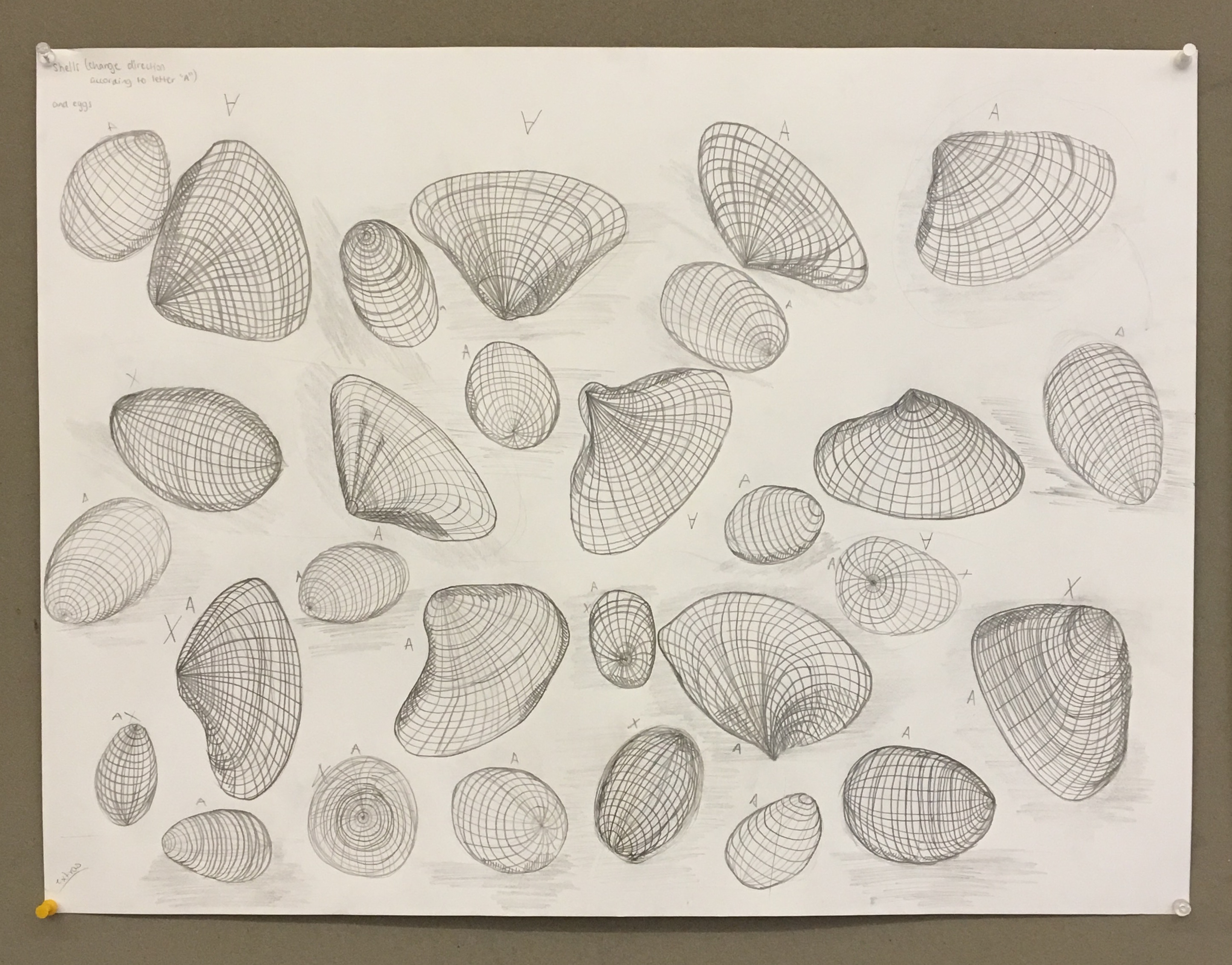 Drawing and Imaging: Eggs and Shells