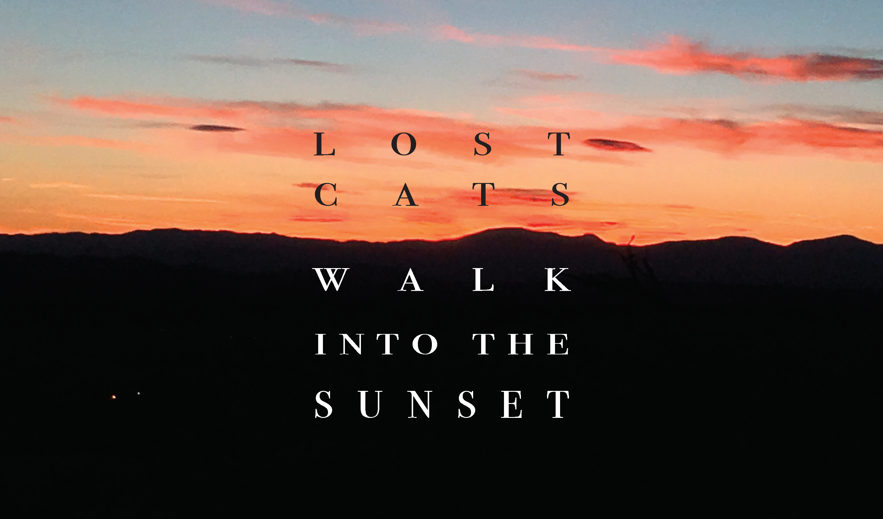 lost cats walk into the sunset