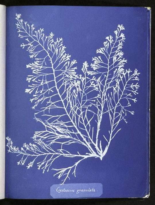 Readings: Anna Atkins Sun Gardens & Cradle to Cradle