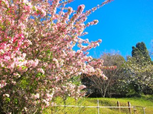 katoomba-blue-mountains-in-spring1
