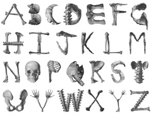 skeleton-alphabet
