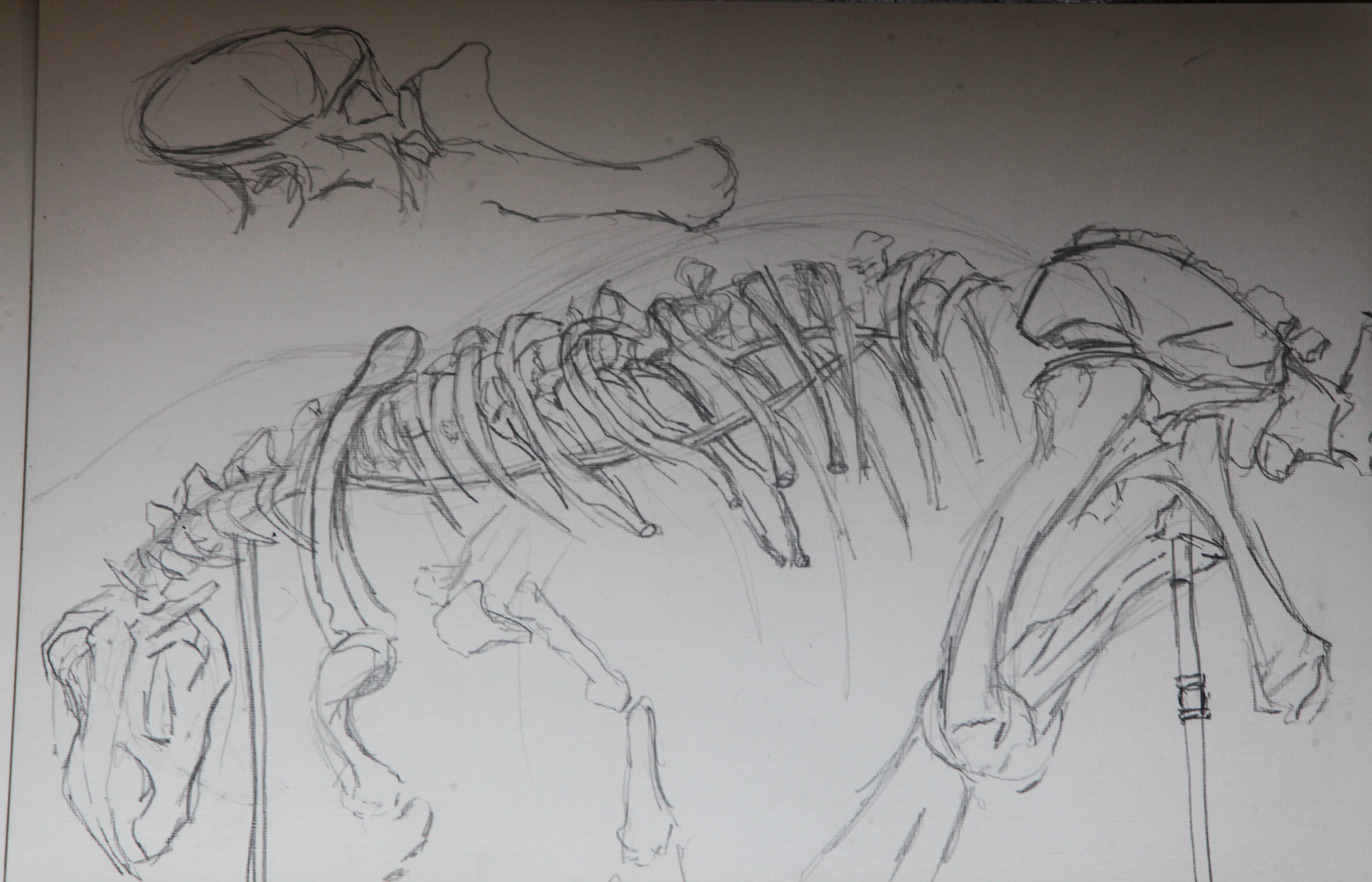 Study of dinosaurs