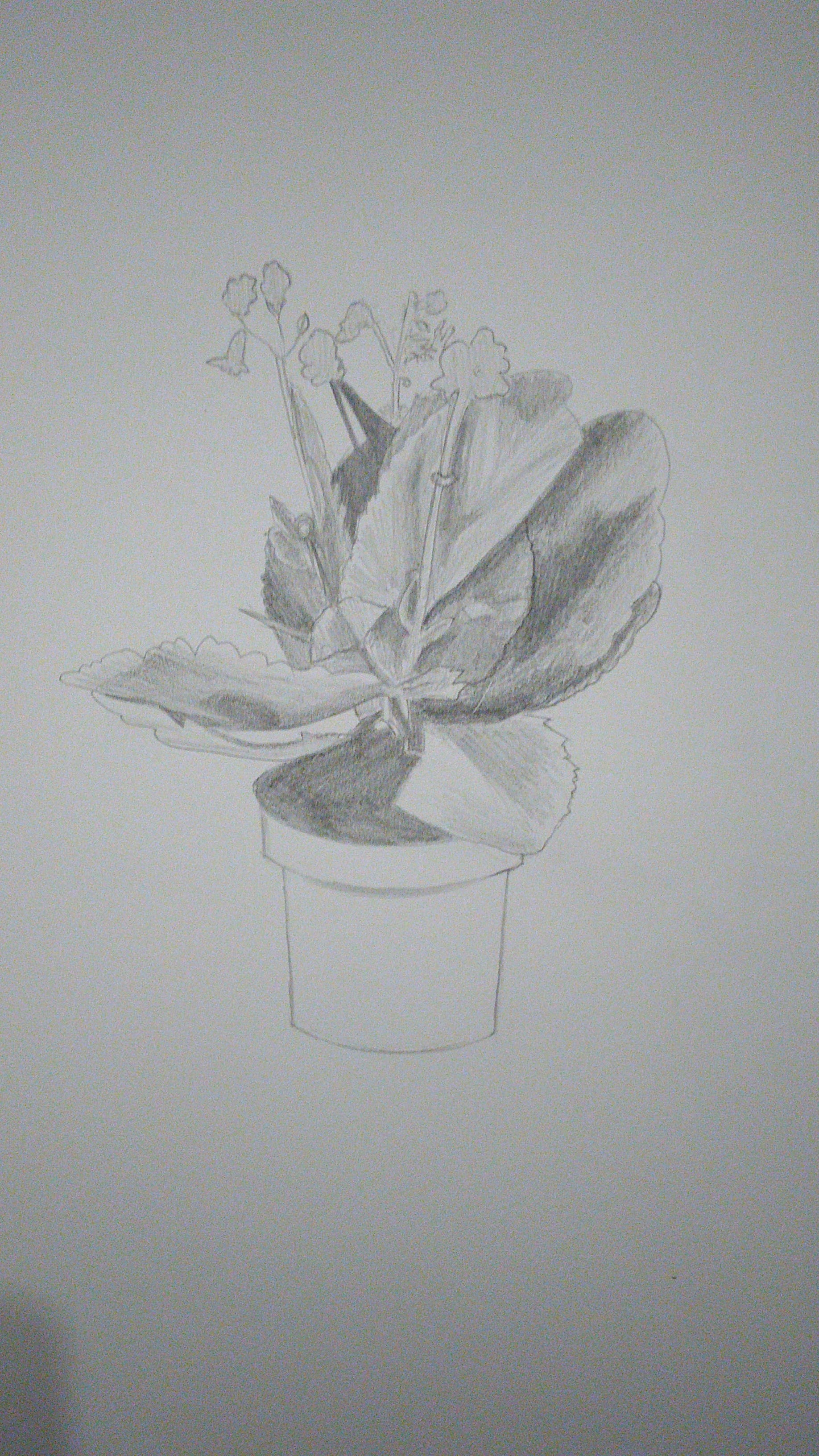 Drawing with Value: Flower Pot