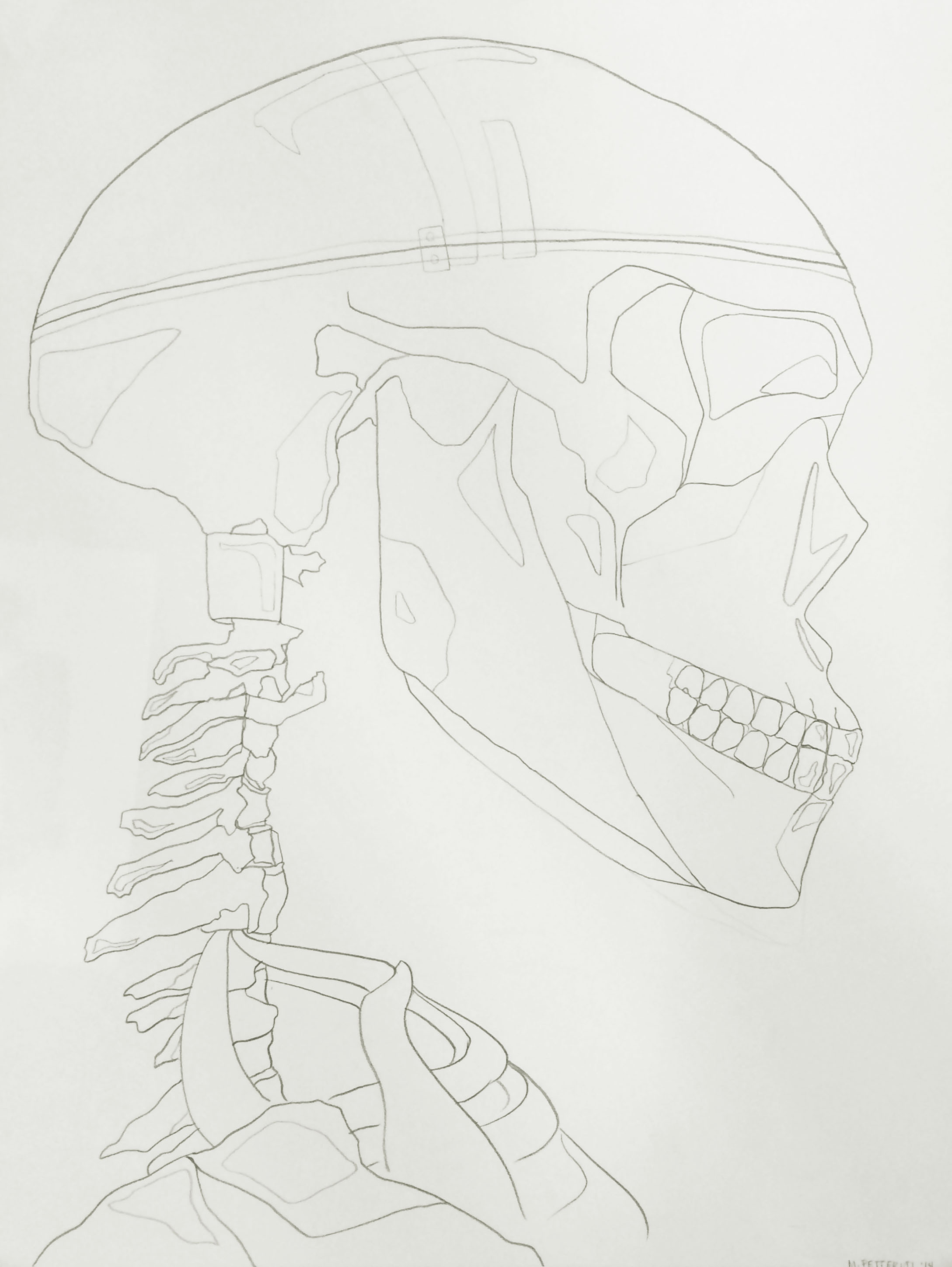 Contour Drawing: Skeleton