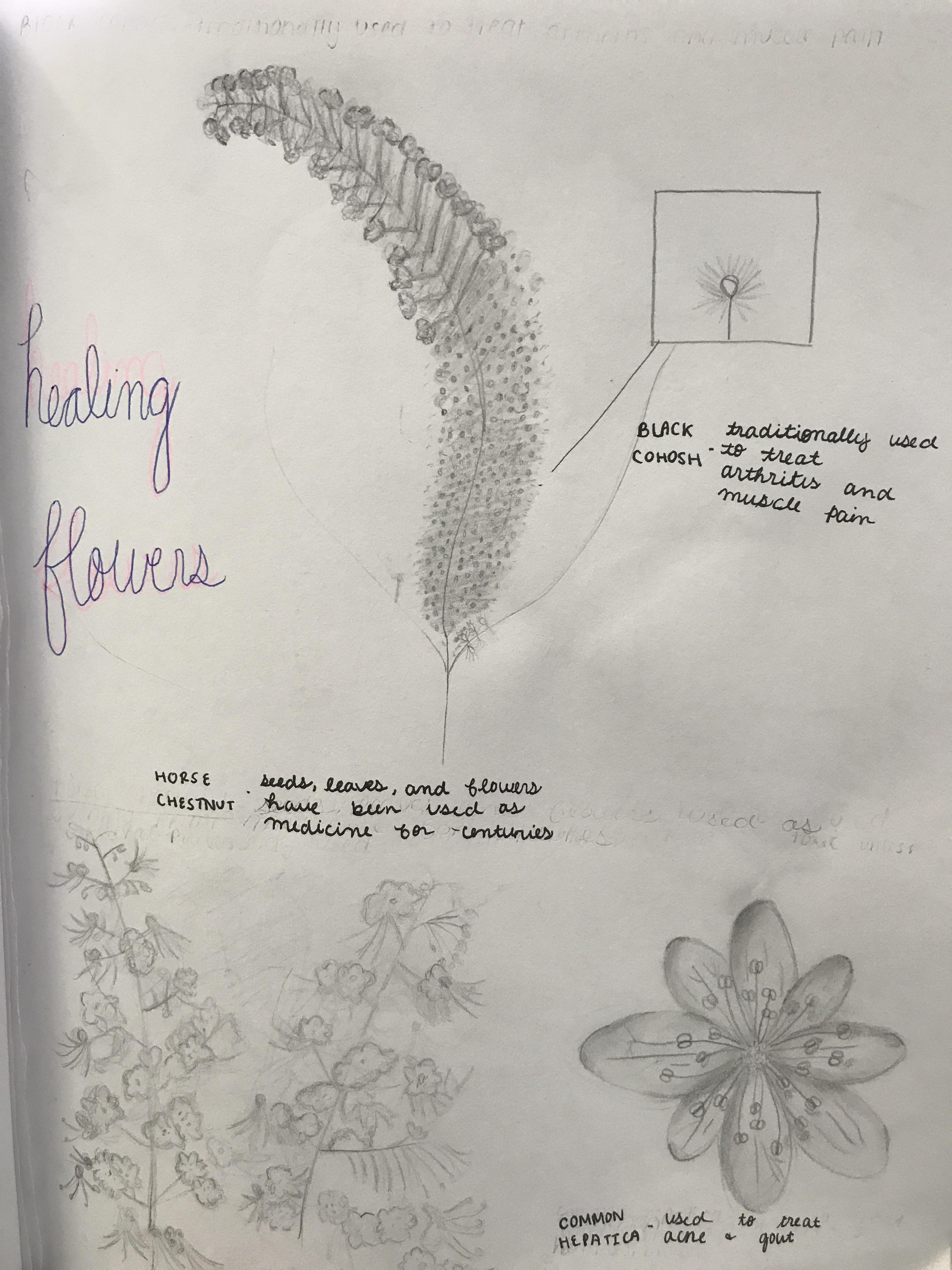 Symbolic Botany