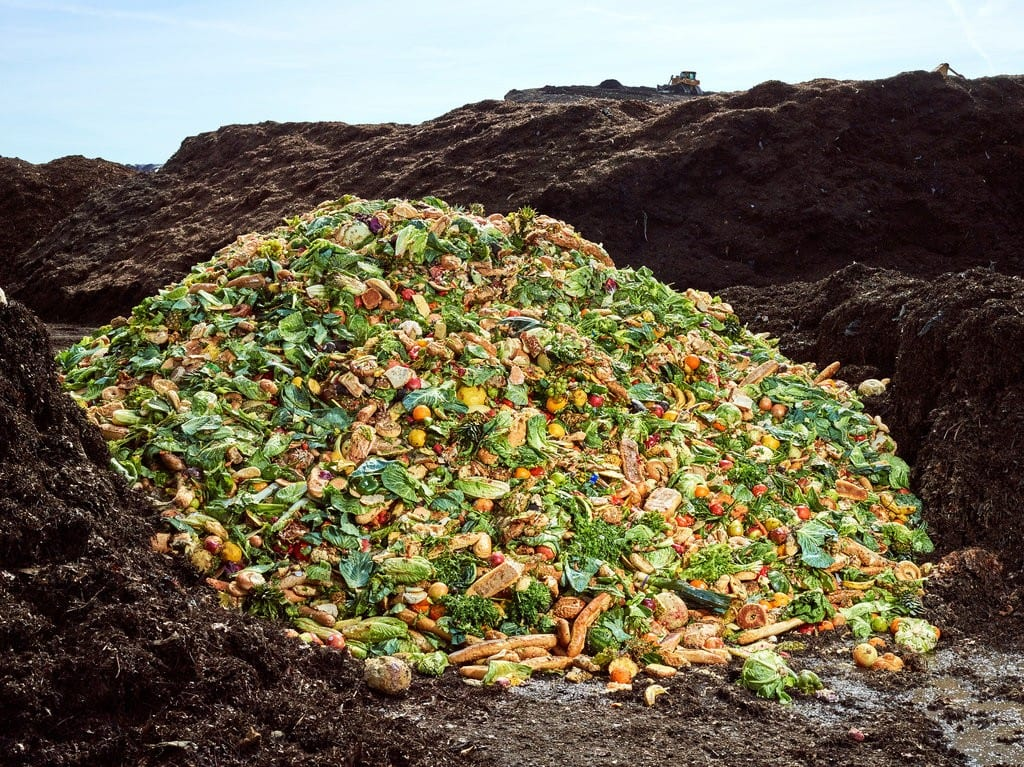 """Reading Response to """"The Compost King of New York"""""""