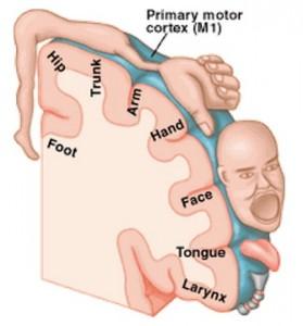 anatomy of movement1b