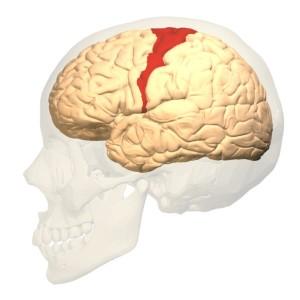 primary-motor-cortex
