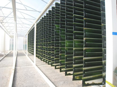 Reflection on Biofuel Cell lab