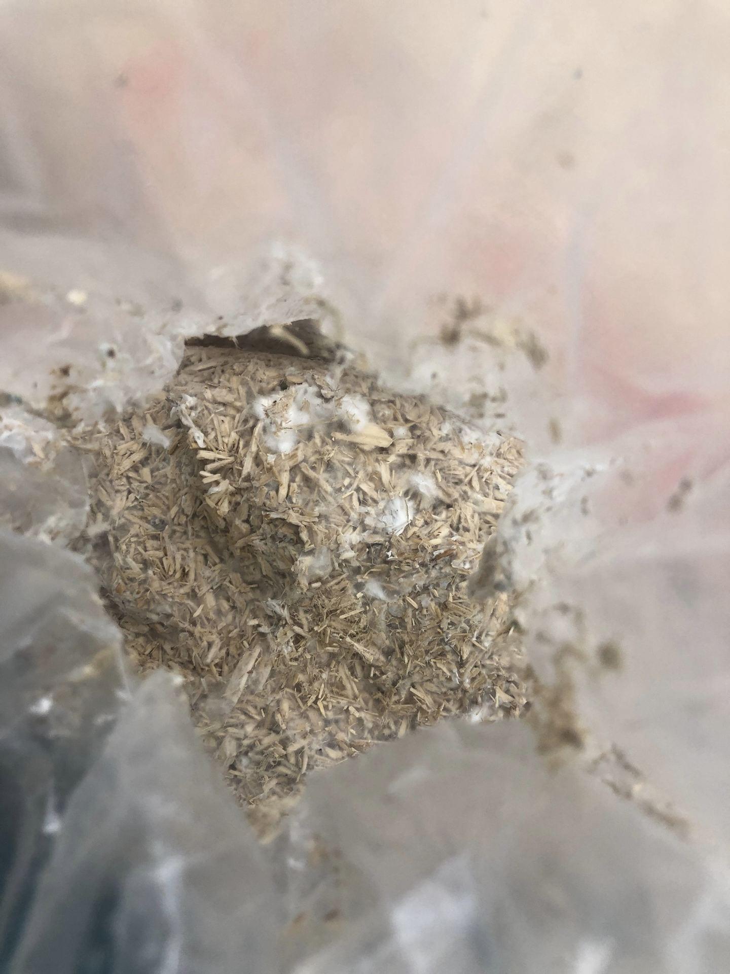 Mycelium Foam assignment 9