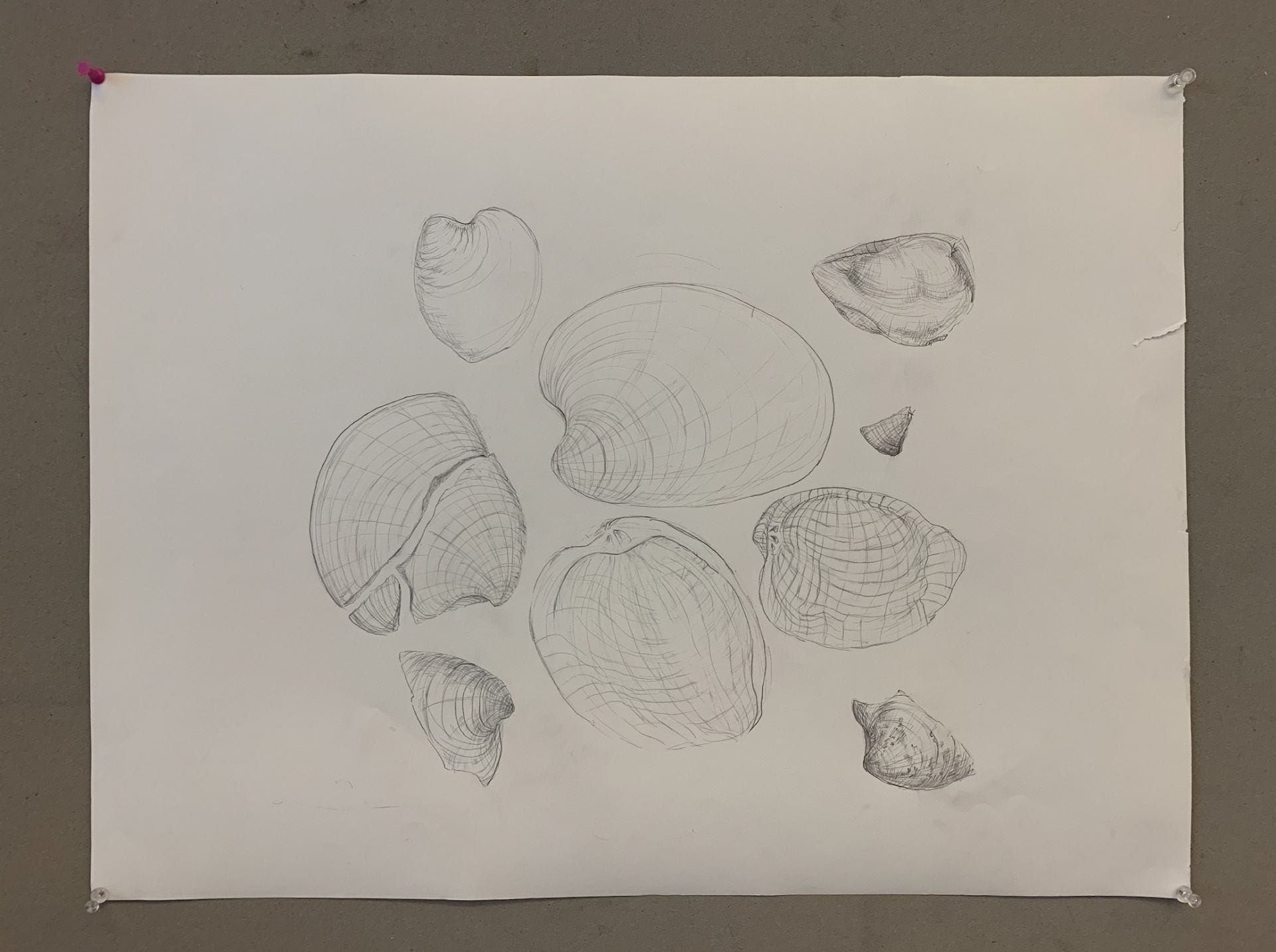 Shell Drawing with Countour lines