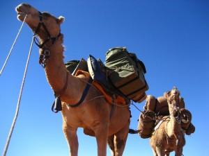 9-camels