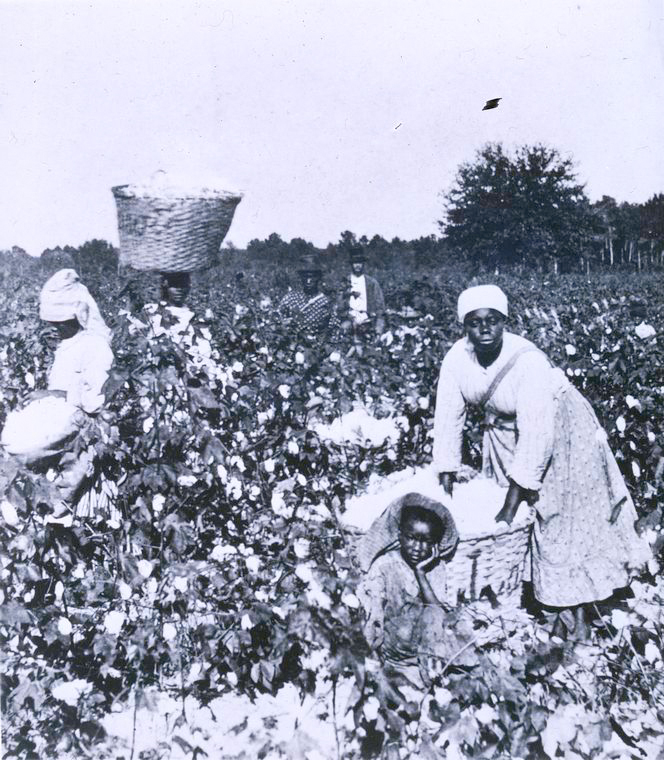 "Schomburg Center for Research in Black Culture, Photographs and Prints Division, The New York Public Library. ""Picking cotton."" The New York Public Library Digital Collections. http://digitalcollections.nypl.org/items/510d47dc-4905-a3d9-e040-e00a18064a99"