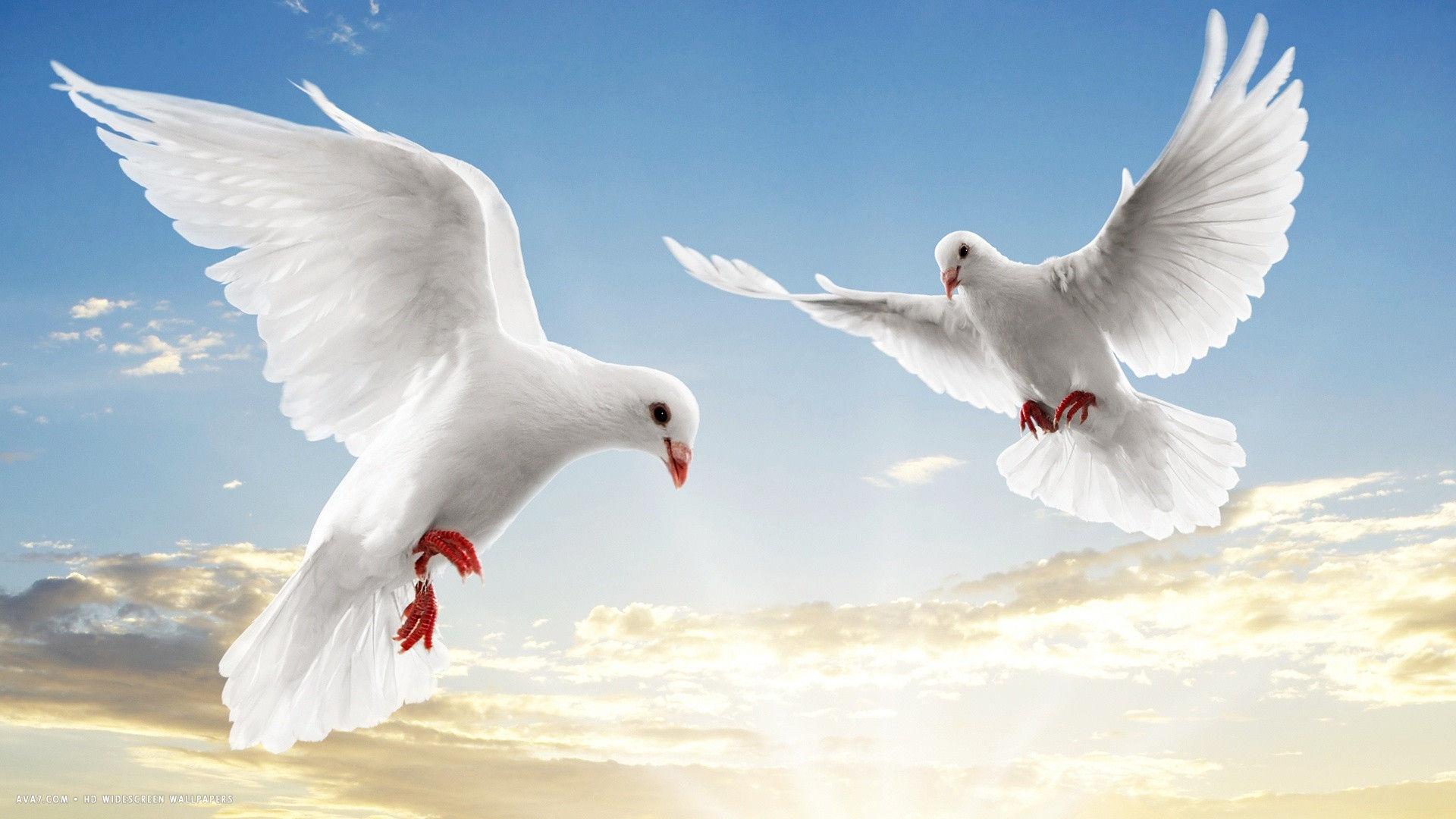 Dove Bird Flying Wallpaper 3 Johanna Sapicas