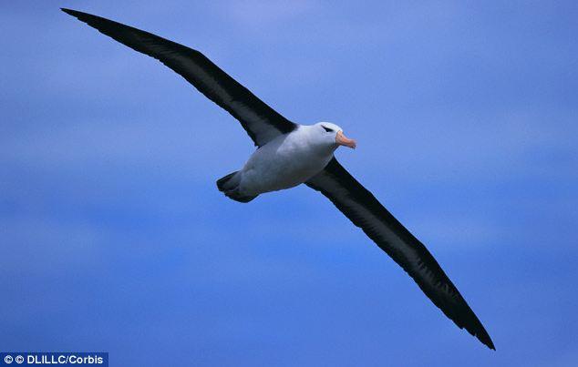 Plastic Albatross Crisis – Michelle Laporte