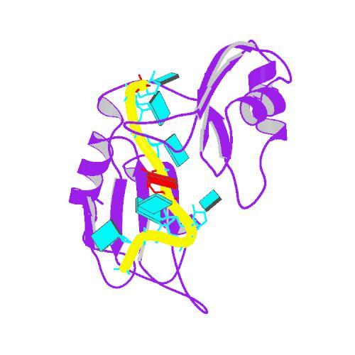 PBB_Protein_ELAVL4_image