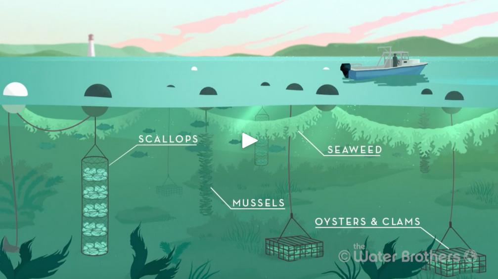 Ocean Farmer – GreenWave
