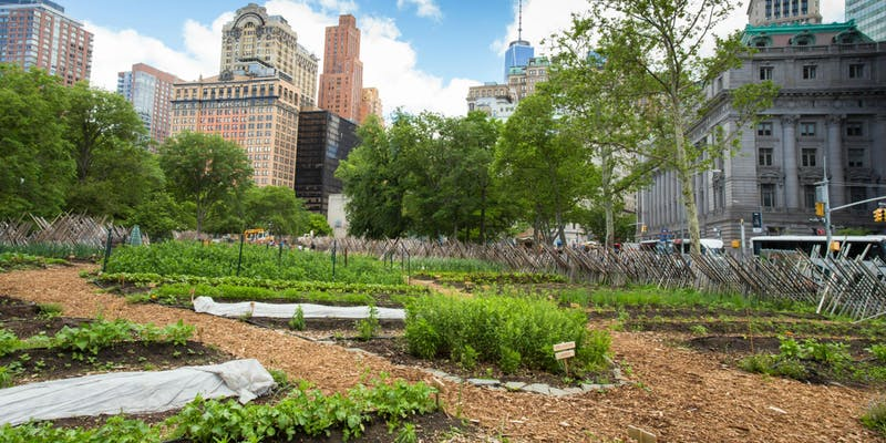 Growing Food Right Here in NYC / Panel Discussion