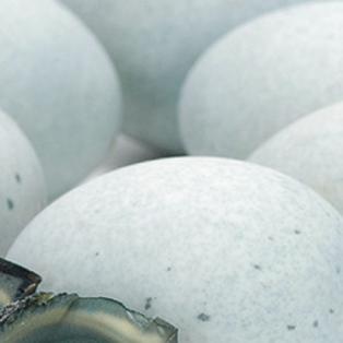 Egg Dance – Interlude B