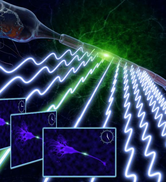 Fast Fluorescence Imaging