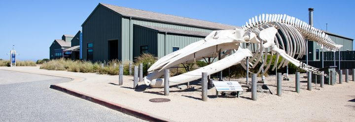 A large whale skeleton sits in front of a building.