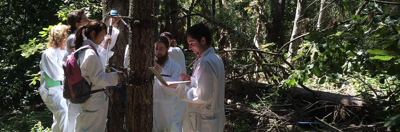 Forest Ecology Research Plot (FERP) Internships