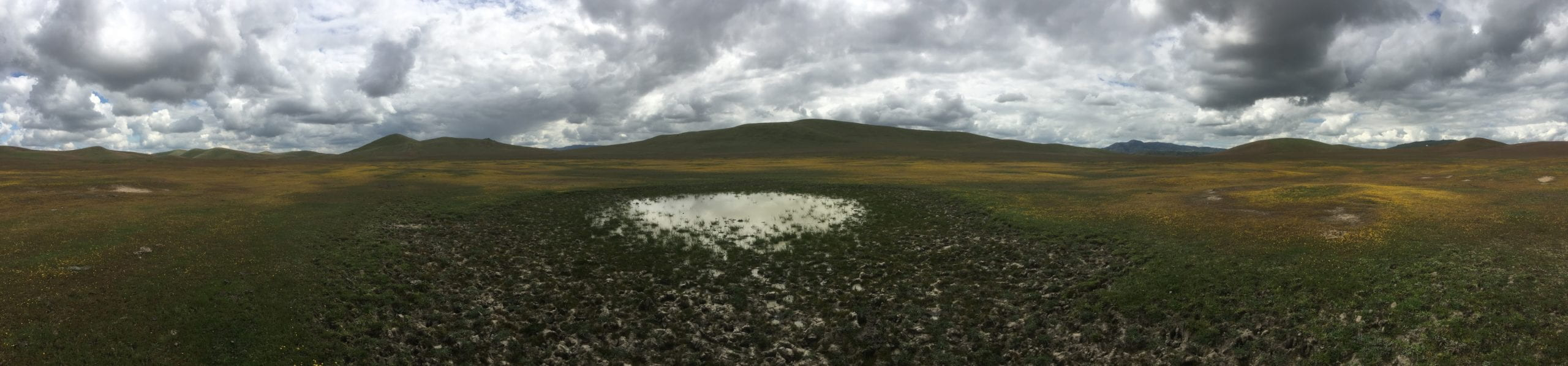 Vernal pool where amphibians breed and flowers bloom