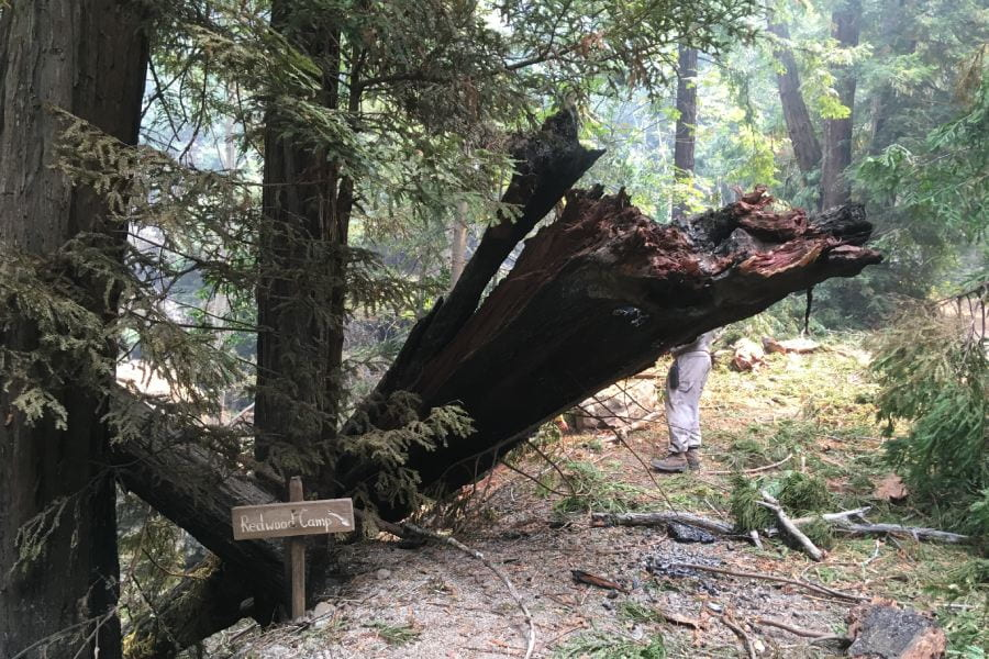 A fallen burnt tree at the trail to Redwood Camp, where field course students overnight.