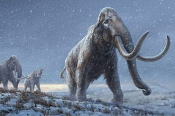 Oldest DNA ever sequenced reveals how mammoths evolved