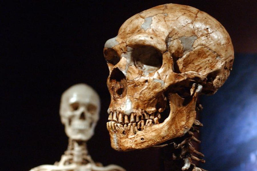 UCSC Paleogenomics Lab finds only 7% of our DNA is unique to modern humans