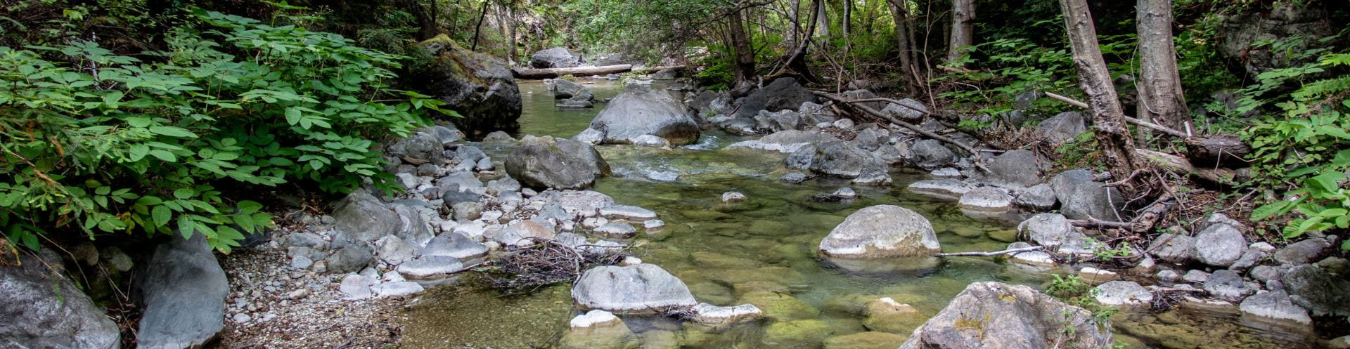 Big Creek Steelhead Ecology