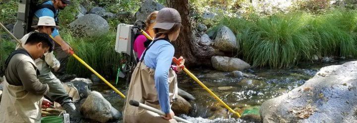 Carmel River Restoration team electrofishing