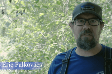 Salmon Nation interview with UCSC's Eric Palkovacs: Studying Central California Coast coho salmon and steelhead
