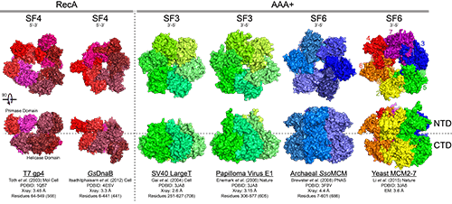 Figure 1 Hex Helicase Structure 500px
