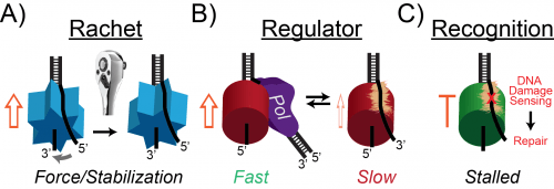 Helicase SEW Models2