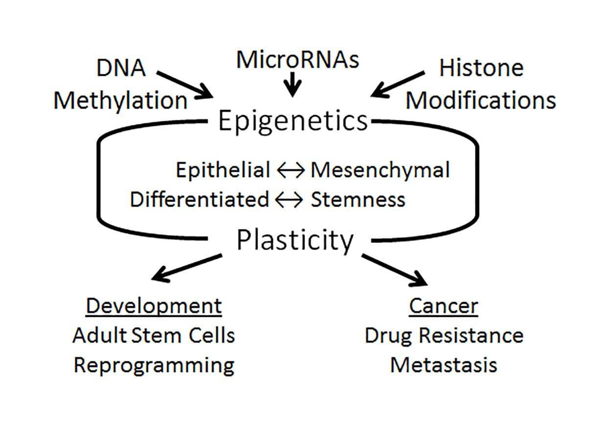 Uncovering the Epigenetic Foundation of Epithelial-Mesenchymal Plasticity