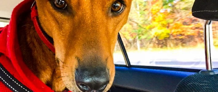 Are Dogs as Smart as We Think?