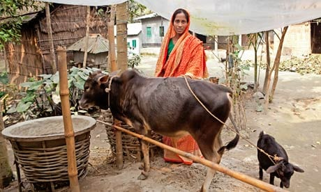 Maleka Begum with the cow and goat she received under the BRAC program.