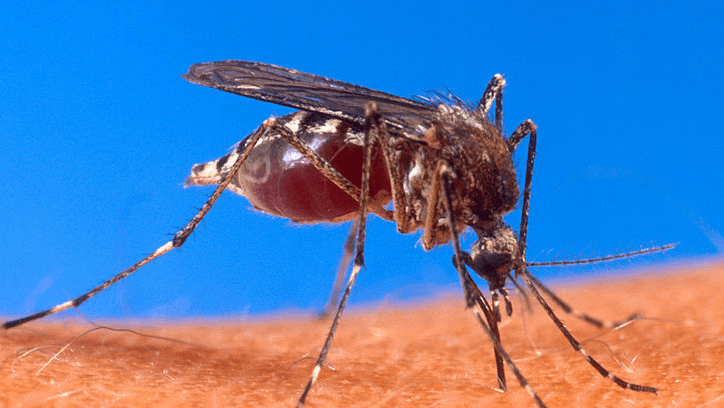 FAWE combats two M-words: mosquitoes and malaria