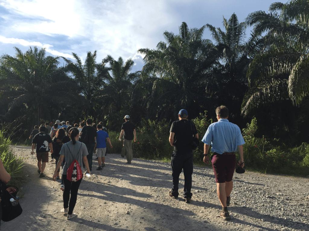 Walking through an oil palm plantation. Photo by Grace Stewart.