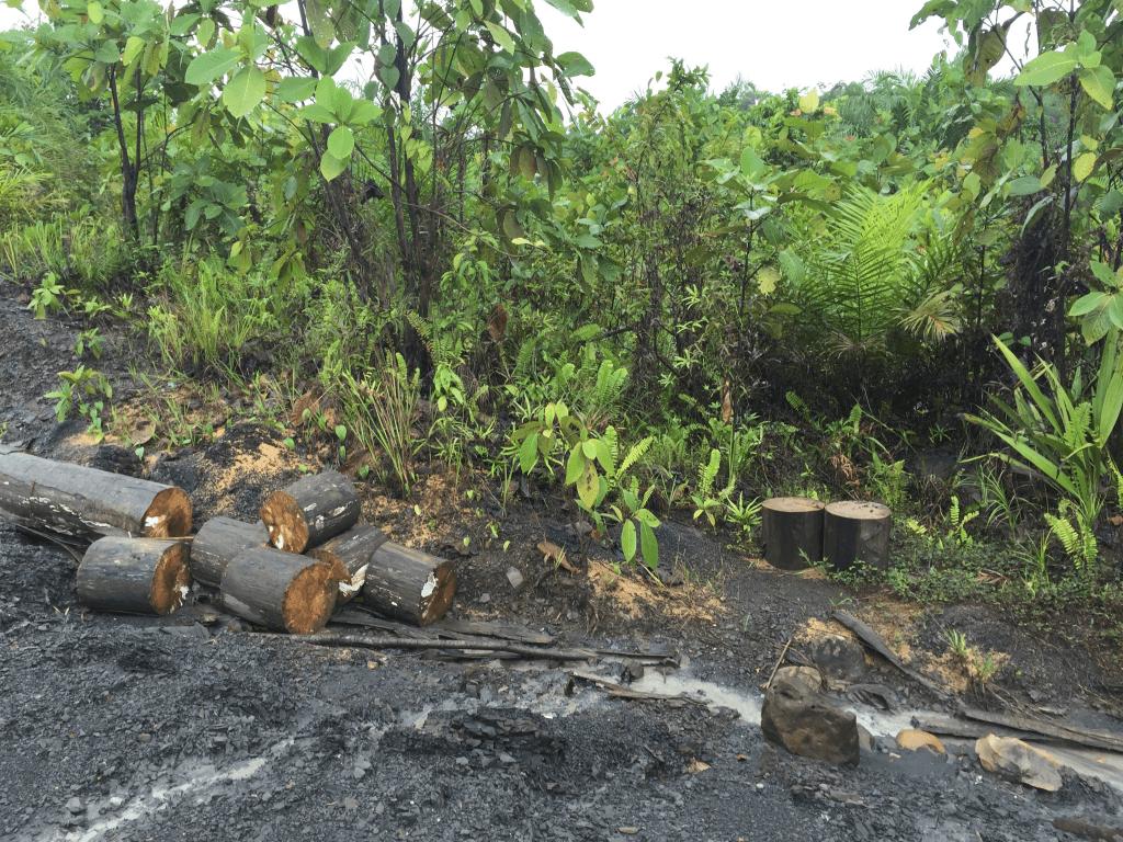 Evidence of deforestation. Photo by Grace Stewart.