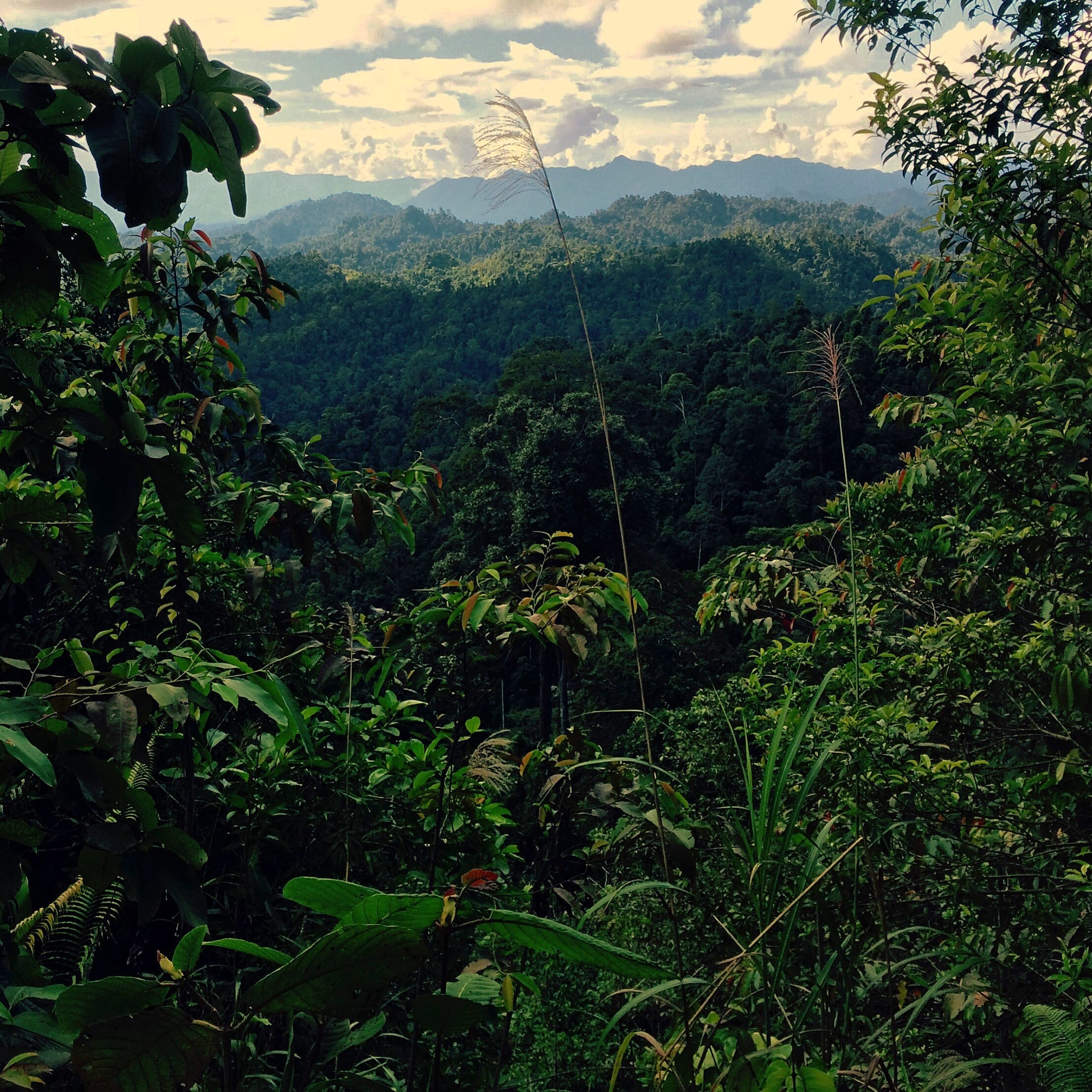 Forests of Sarawak