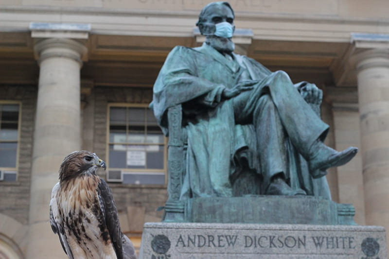 A photograph of a E3, a red-tailed hawk, sitting on the base of the A. D. White statue.
