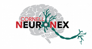 Cornell NeuroNex Technology Research Hub Logo