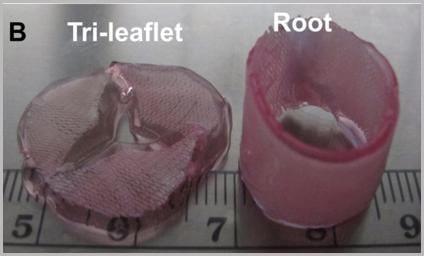 thrust-3-Heart-Valve-Regeneration-and-Tissue-Engineering