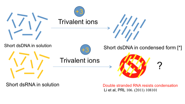 importance of dna and rna