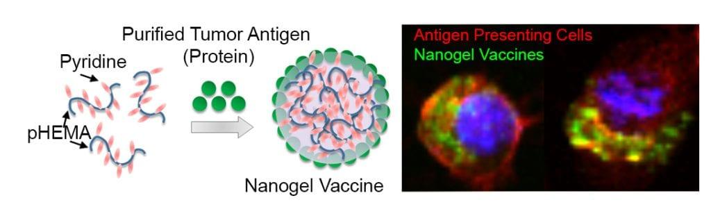 Purified Tumor Antigen